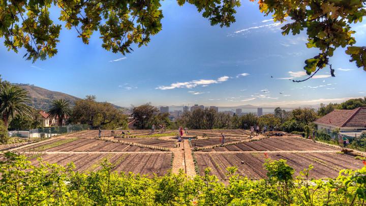 Image courtesy of Oranjezicht City Farm